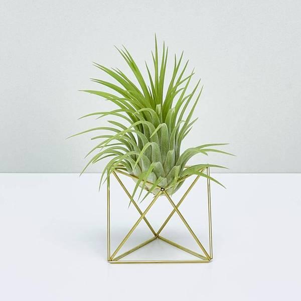 plantlover-Table-Himmeli-Rubra-3959-62-1020x1020_600x