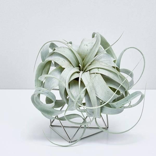 plantlover-Table-Himmeli-Silver-Xerografica-3884-62-1020x1020_600x